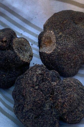 truffe-tricastin
